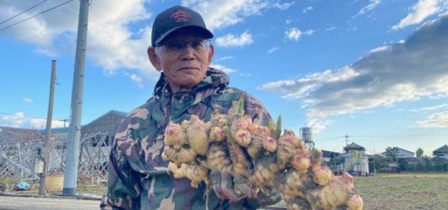 2020年度生姜収穫